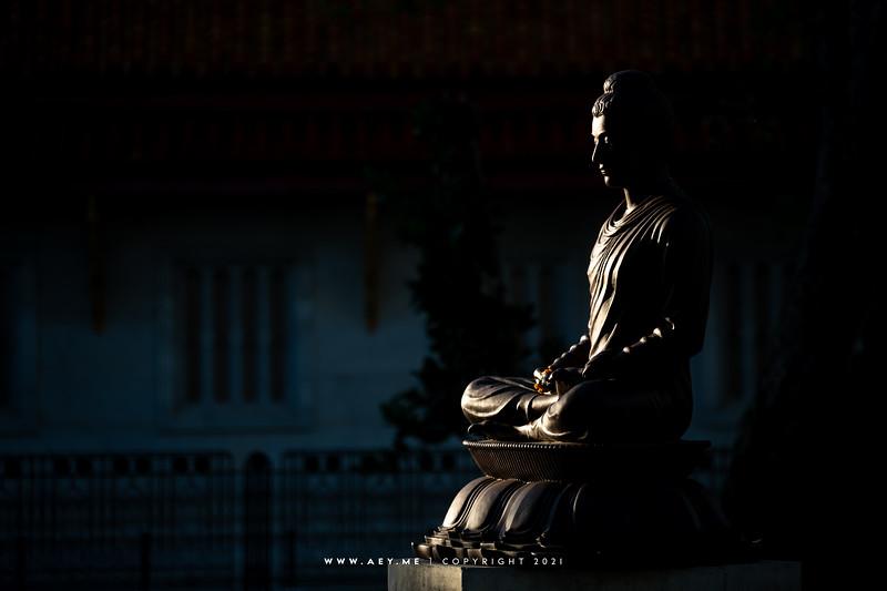 Sri Maha Bodhi & Others