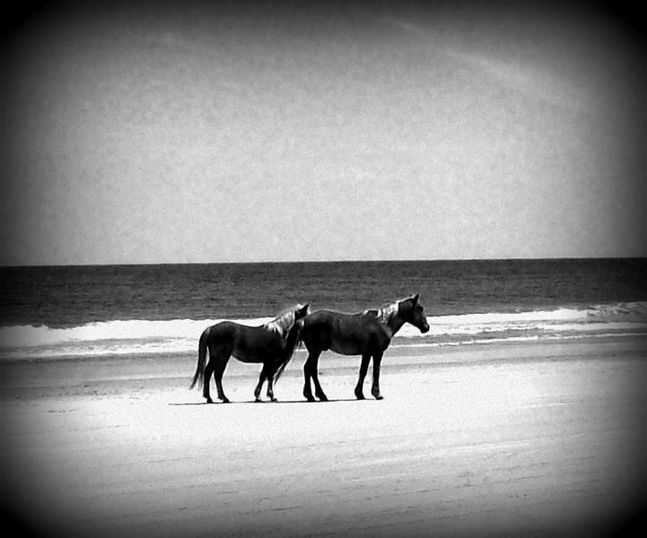 Outer Banks Corolla (161).jpg