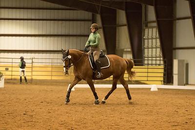 Horse 607