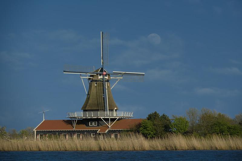 HOLLAND - TULIPS & WINDMILLS-0231.jpg