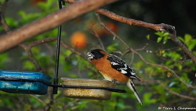 Birds of Spring 2020