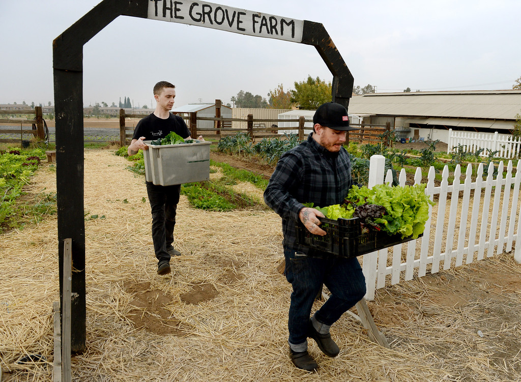 . Head Chef, Jonathon Wiener, of The Lounge 22 Bistro & Bar in Redlands and cook Nick Loewy, leave The Grove School Farm after picking produce for the restaurant, Tuesday morning in Redlands, Nov. 19, 2013. The restaurant started working with the middle school last week for their produces needs and in the future will use the schools facilities to grow the majority of their own produce. (John Valenzuela/Staff Photographer)