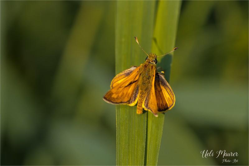 2017-07-19 Petite Camargue Alsacienne - 0U5A2883.jpg