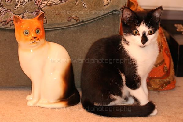 2015-07-18 Cats