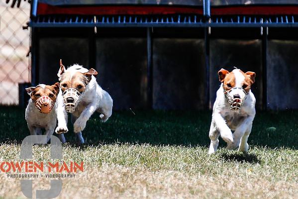 Dogs Running 07182020