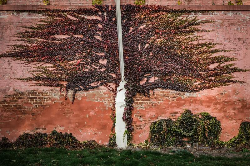 brevnov stromy-004.jpg