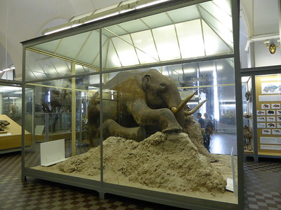 St Peterburg's Zoology Museum