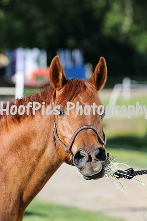 Comox Valley Pony Club Show June 2017 SUNDAY PROOFS