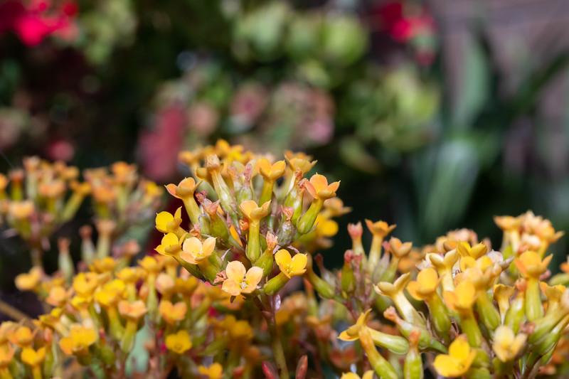 succulent-9695.jpg