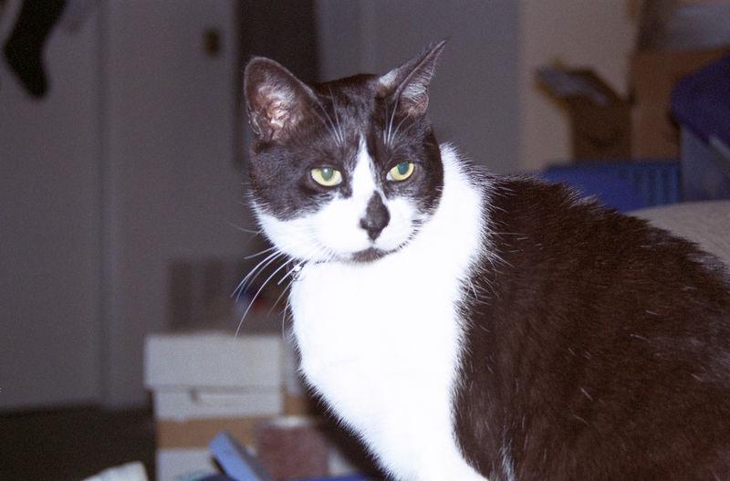 2003 12 - Cats 41.jpg