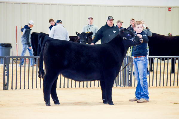 Woodward Cattle Shows