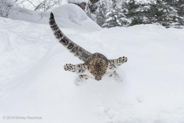 Winter Wildlife with Adam Jones