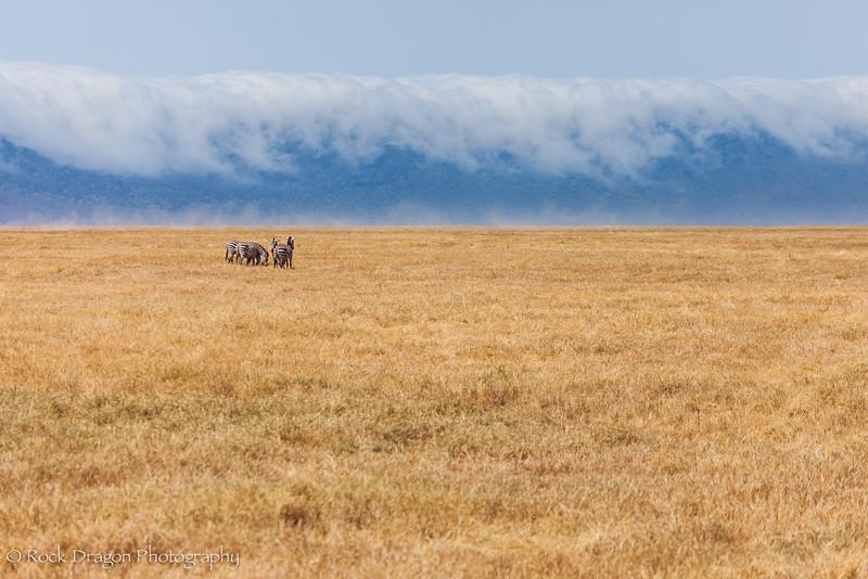 Ngorongoro-50.jpg