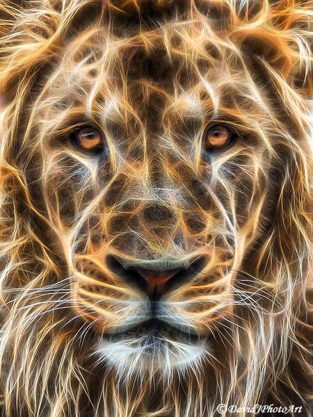 Exotic Animal Photo Art