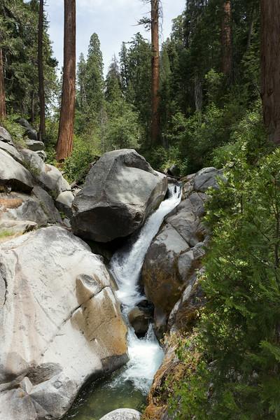 Sequoia_0524.jpg