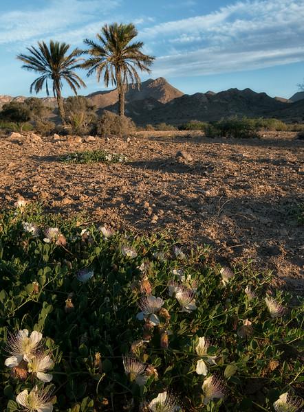 desert like landscape in the nature reserve of Cabo De Gata.  Almeria,Spain, 2014.