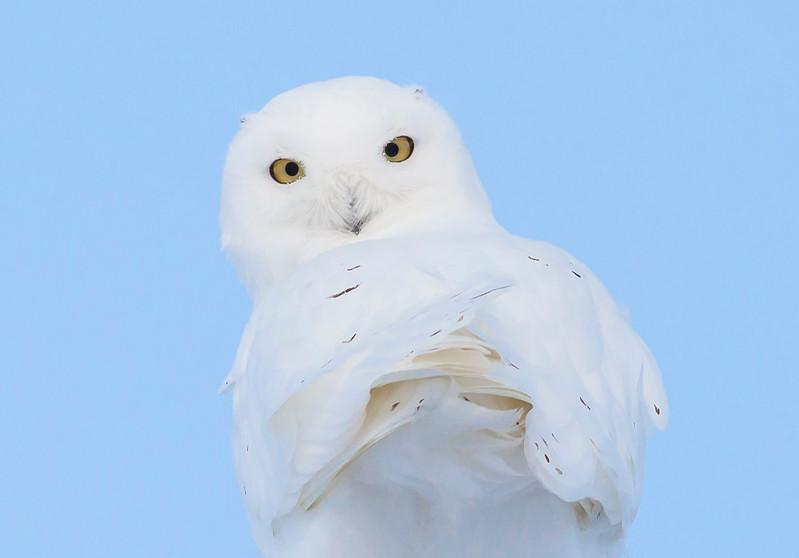 Snowy Portrait 1.jpg