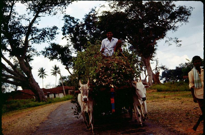 India1_071.jpg