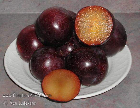 Beauty Plum (Prunus salicina sp.)