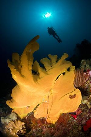 Weda Bay-Halmahera-Indonesia 2012
