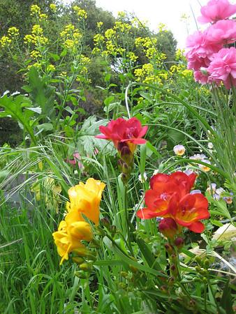 carolines fabu garden