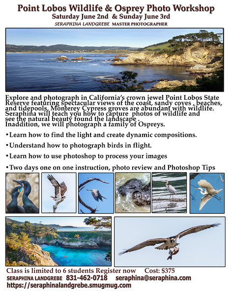 Point Lobos Wildlife & Osprey Photo Workshop-Recovered.jpg