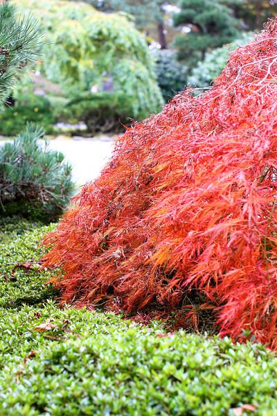 Portland Japanese Garden  11-11-11  3502.jpg
