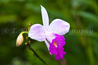 Flowers and tropical vegetation