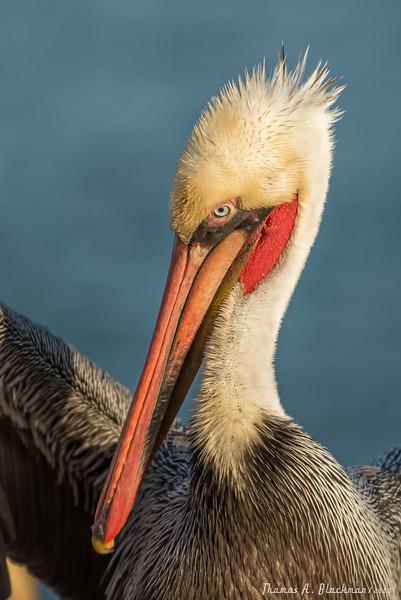 2020 Birding