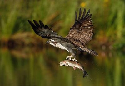 Osprey and Raptor 2020,  3 day masterclass
