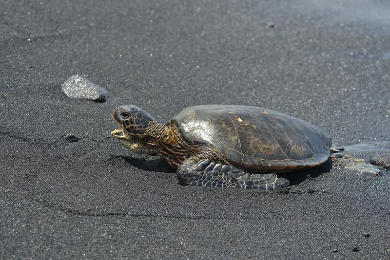 Big Island - Hawaii - May 2013 - 24.jpg
