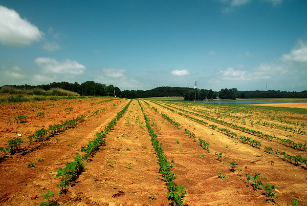 Farming & Cultivation