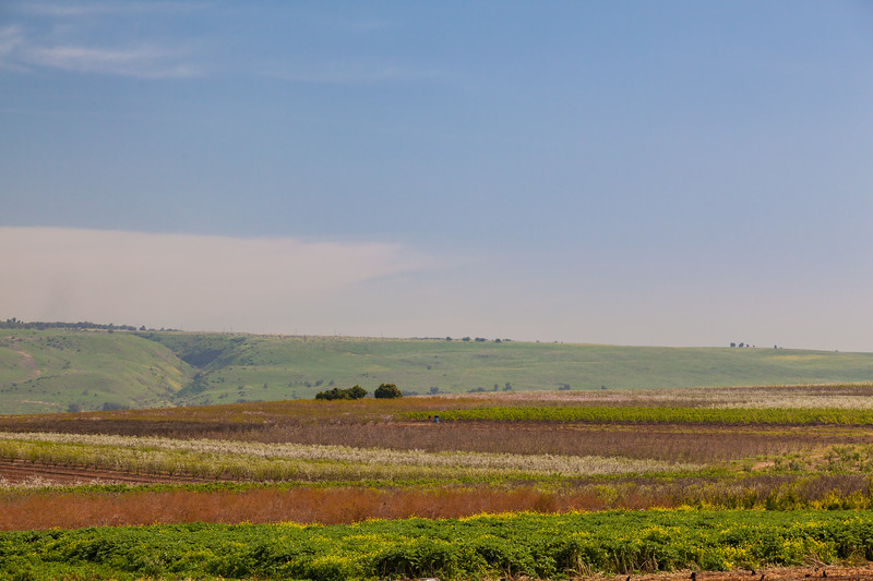 Colorful landscape of the Golan Heights and fields of flowers in the early spring in Israel.