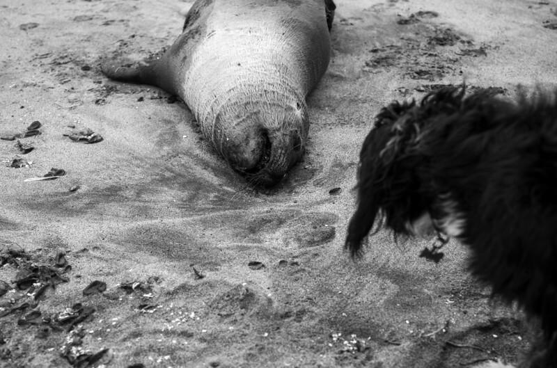 ocean beach neil and juan carlos quarantine 1111874-29-20.jpg