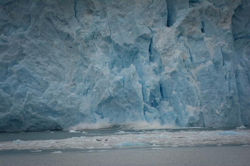 Kenai-Fjords-87.jpg