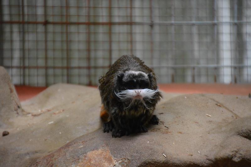 20180624 Antwerpen Zoo GVW_9290.JPG