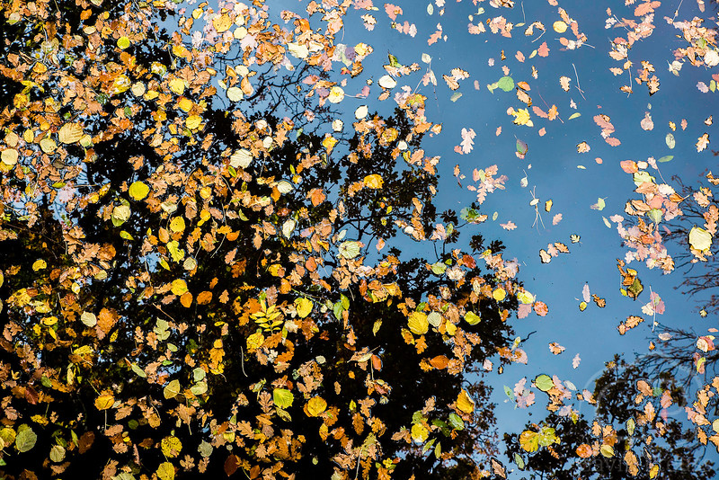 Autumn Leaves and Relection.jpg