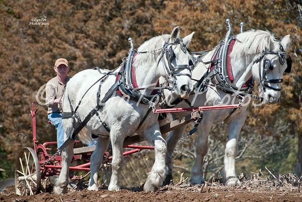 2015 Plowing at Ron Gluck's