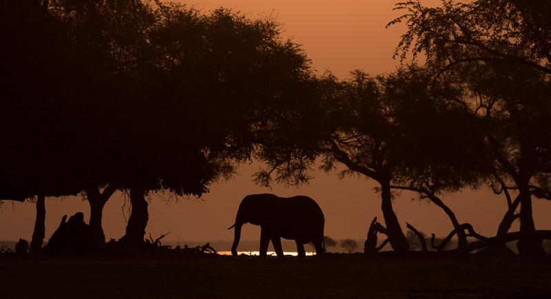 Elephant silhouette, Mana Pools National Park