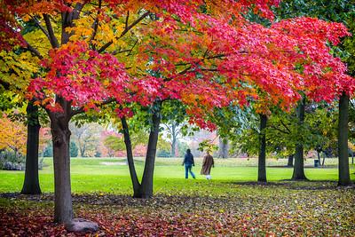 Autumn - 2014