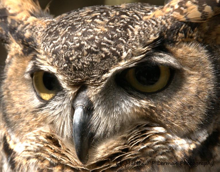 185 Owl,San  Francisco 165x.jpg