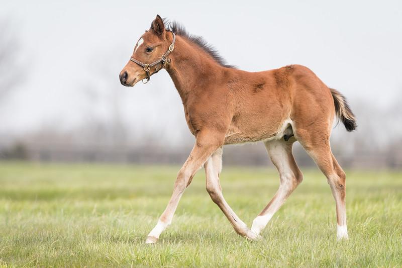 Runhappy - Always in My Heart '18 colt at Pin Oak 4/13/18. Born 2/27/18.
