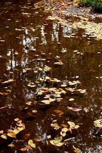 Lanana Creek025