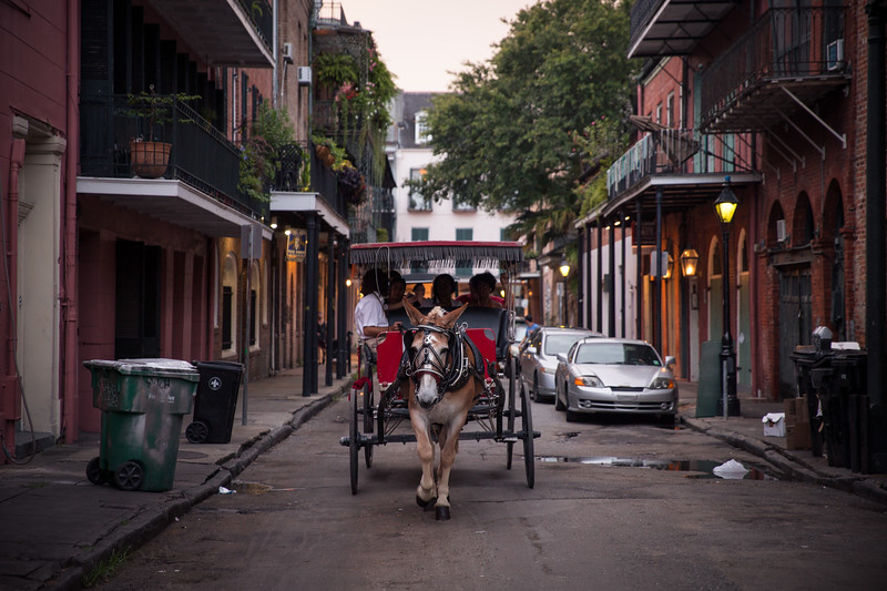 French Quarter Horse-1174.jpg