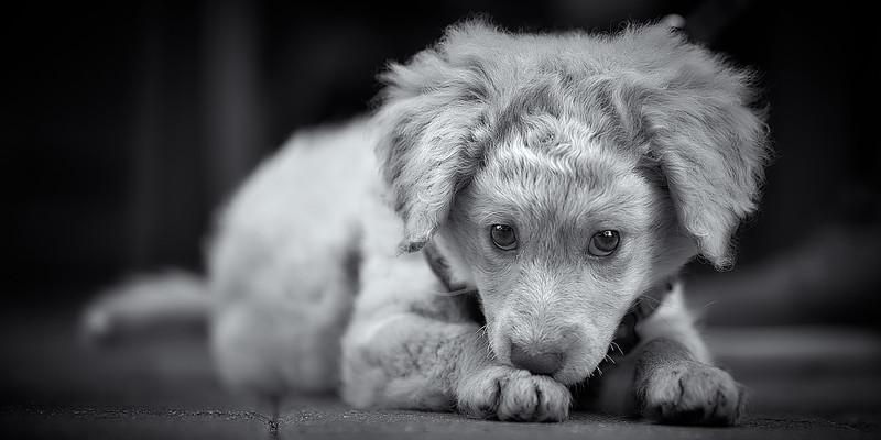 puppymar1317 13.jpg