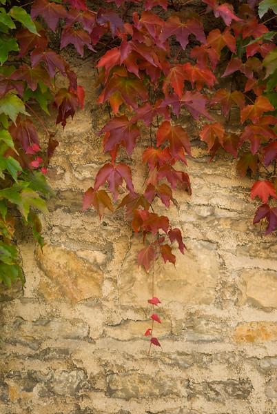 beaune red leaves.jpg