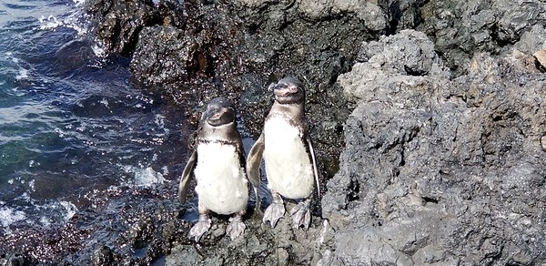 Galapagos-201906-KB