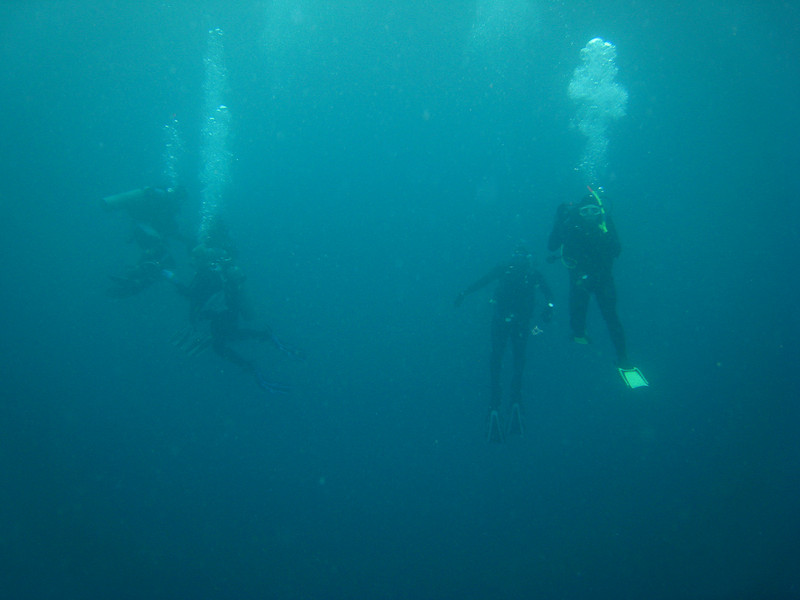 Diving in the Galapagos (390 of 392)