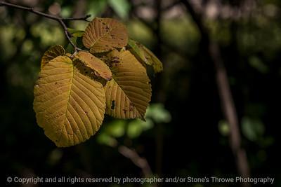 015-leaf_autumn-wdsm-07sep14-003-9465