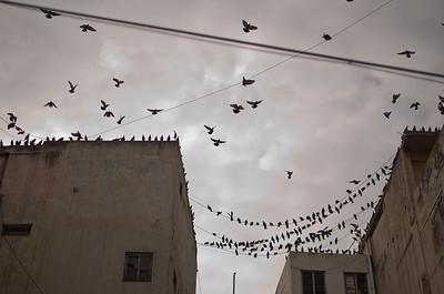 birds over chickpet. digital.
